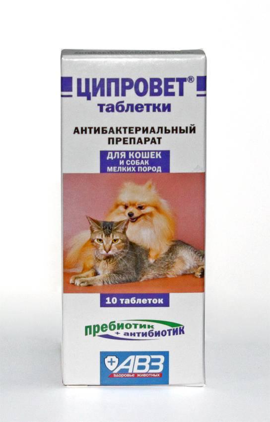 Ципровет таблетки для кошек, собак и щенков мелких пород петдог